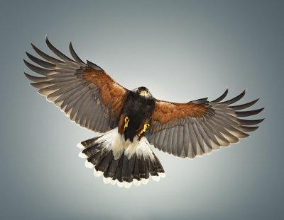 Hawk #0 slide